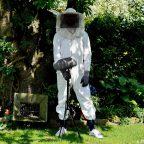 Fliegen, Bienen und Mücken sind keine Bedrohung für DPA-Mikrofone