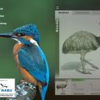 Review: Kosmos – Vögel Europas bestimmen